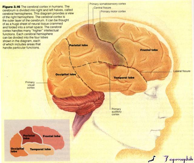 cerebral palsy brain scan quotes